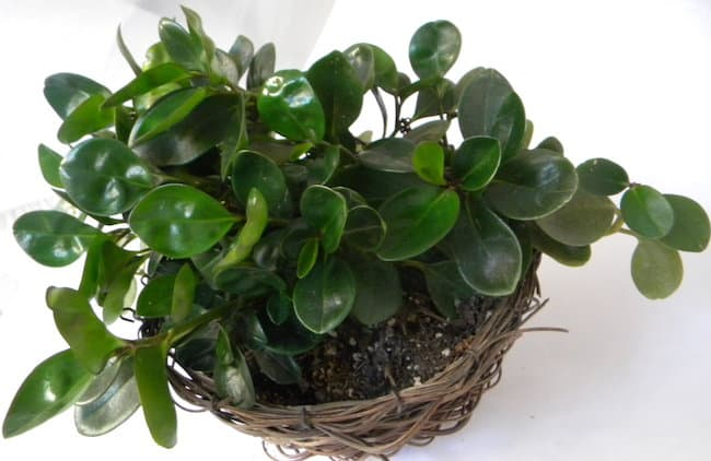 18 Best Low Maintenance Pet Friendly House Plants Gardenoid