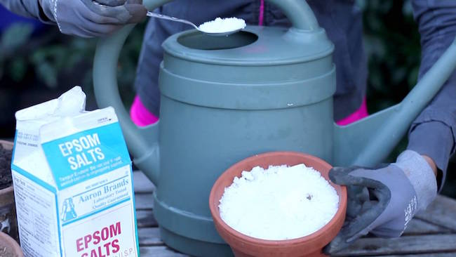 Epsom salt for garden