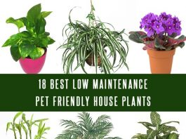 18 Best Low Maintenance Pet Friendly House Plants