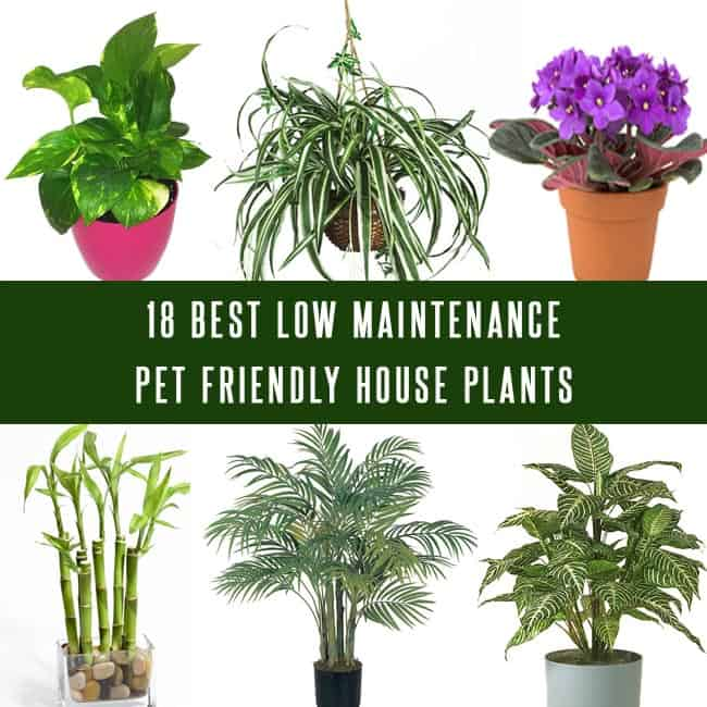 18 best low maintenance pet friendly house plants gardenoid for List of low maintenance plants
