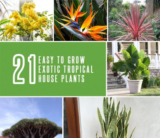 21 Exotic Tropical House Plants
