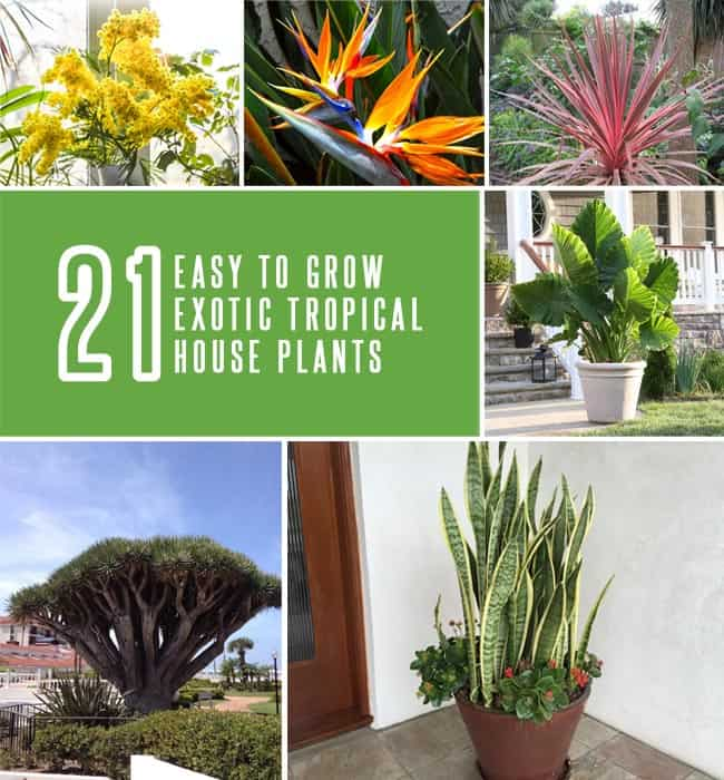 21 Exotic Tropical House Plants That Are Easy To Grow