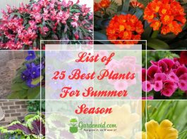 25 Best Plants For Summer Season