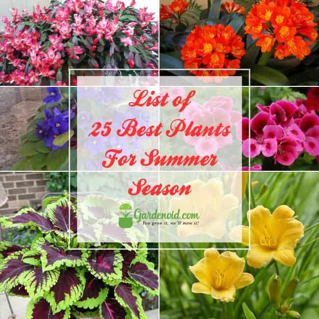 Plants For Summer Season