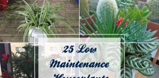 25 Low Maintenance Houseplants That Can Grow Anywhere