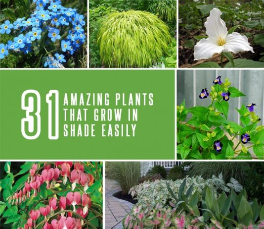 31 Amazing Plants That Grow in Shade Easily
