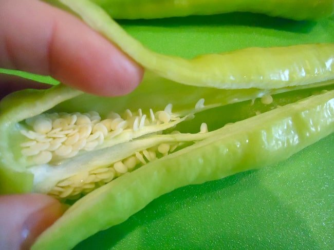 banana pepper propagation