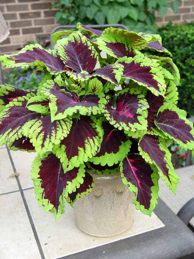 best plants for summer season