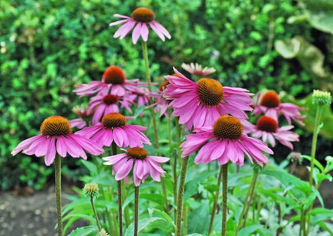 best plants for summer