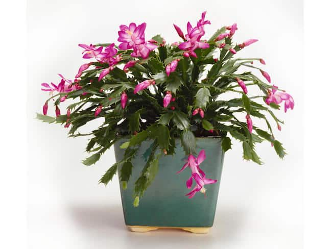 Exotic house plant