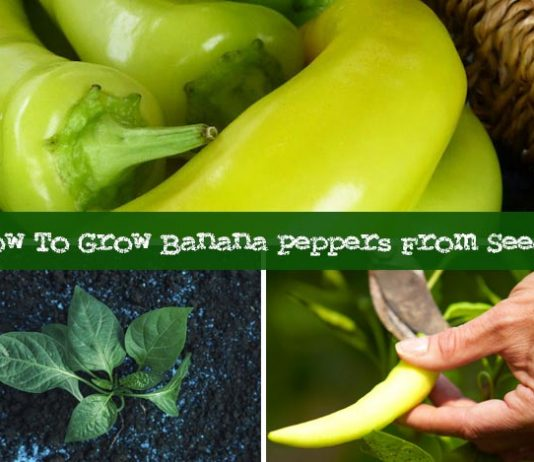 How To Grow Banana Peppers From Seeds