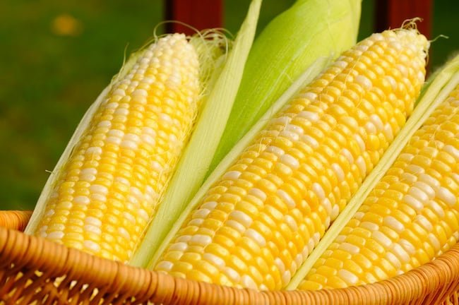 grow corn in containers