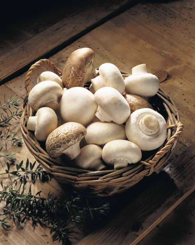 grow mushrooms indoors
