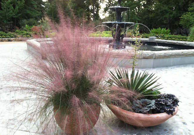 ornamental grasses in containers