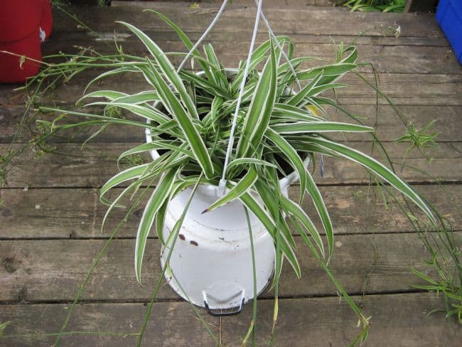 Easy to Grow Houseplants