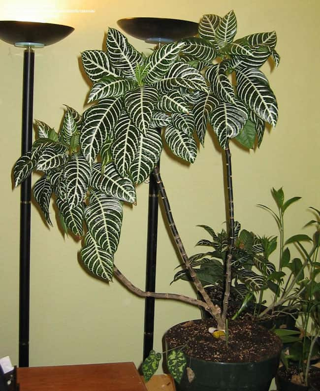 Indoor Tropical Plants
