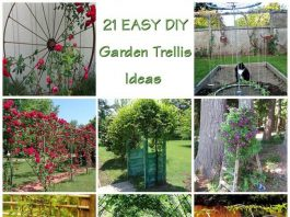 21 Easy DIY Garden Trellis Ideas