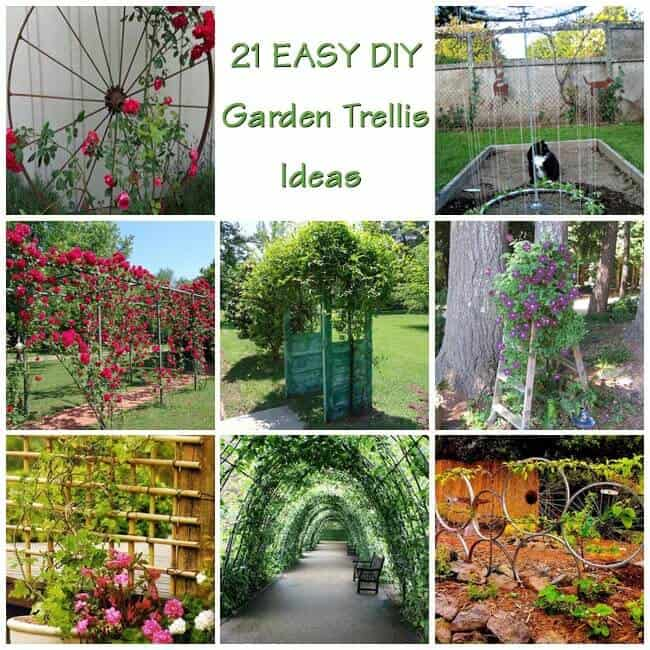 21 Innovative And Easy DIY Garden Trellis Ideas | Gardenoid