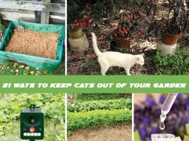 21 Ways To Keep Cats Out Of Garden