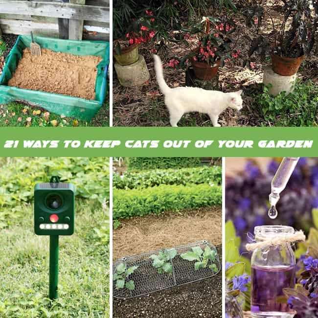 How To Repel Cats - 21 Ways To Keep Cats Out Of Garden
