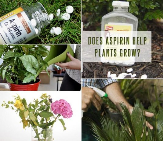Does Aspirin Help Plants Grow