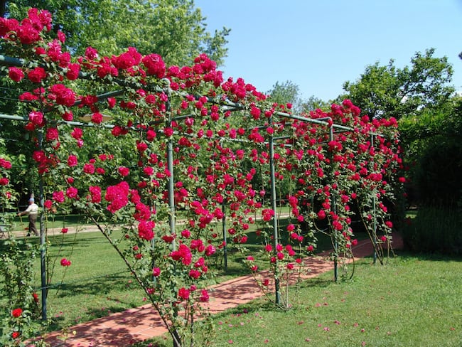 DIY Garden Trellis Ideas