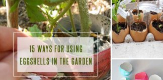 Ways For Using Eggshells In The Garden