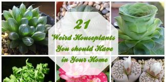 Weird Houseplants You should Have in Your Home