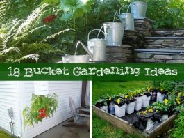 18 Bucket Gardening Ideas