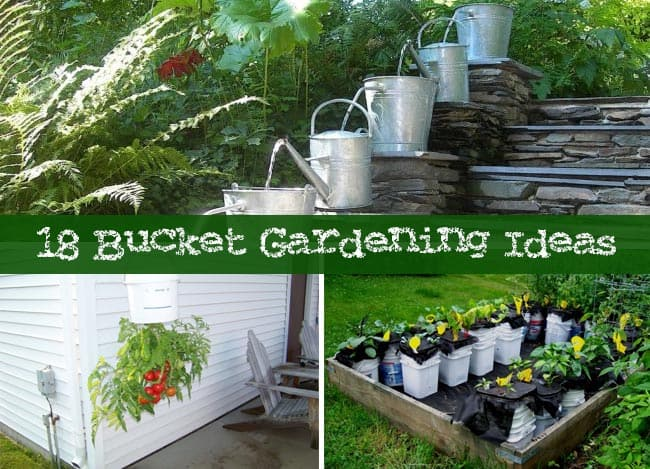 Bucket Gardening Ideas