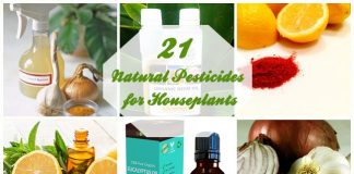 21 Natural Pesticides for Houseplants
