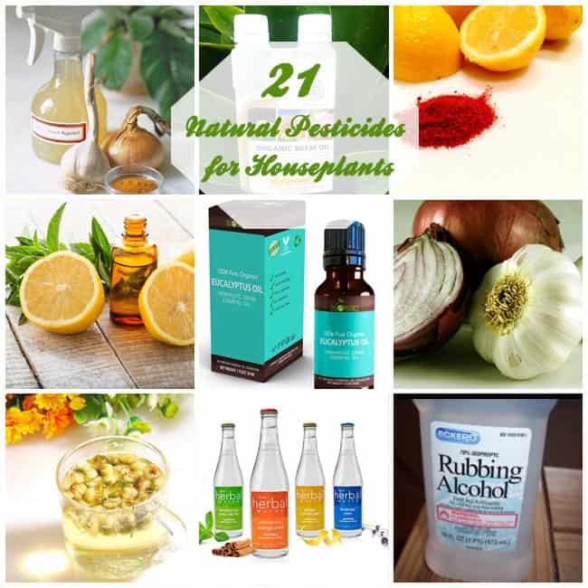 21 Natural Pesticides for Houseplants | Gardenoid