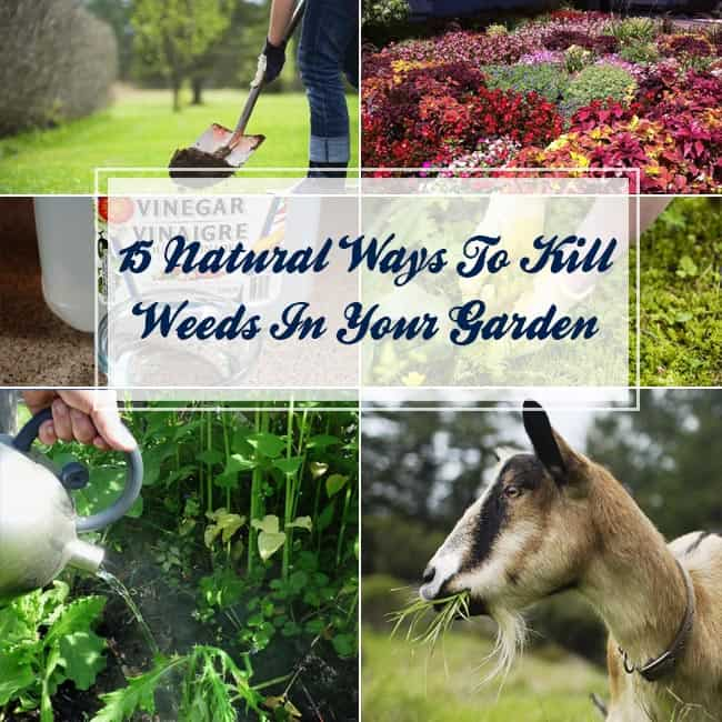 Natural Ways To Kill Weeds