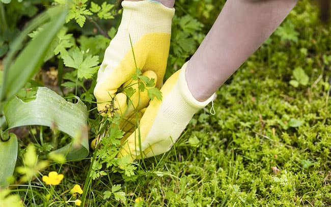 Best way to get rid of weeds permanently