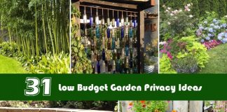 31 Low Budget Garden Privacy Ideas