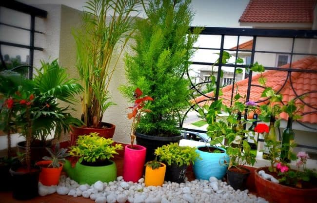 Adorable Small Balcony Garden With Vase Plants And Flowers