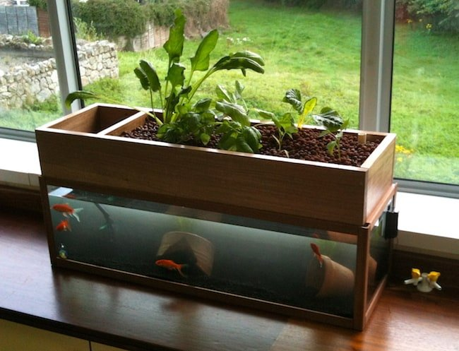Aquarium Water for Plants