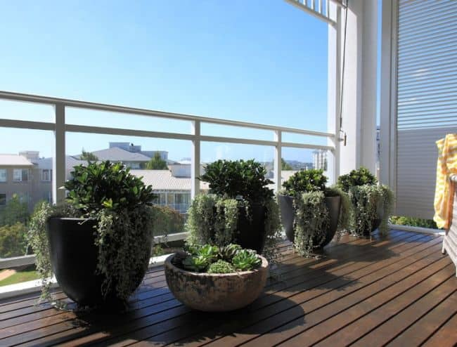 33 apartment balcony garden ideas that you will love for Best flowers for apartment balcony