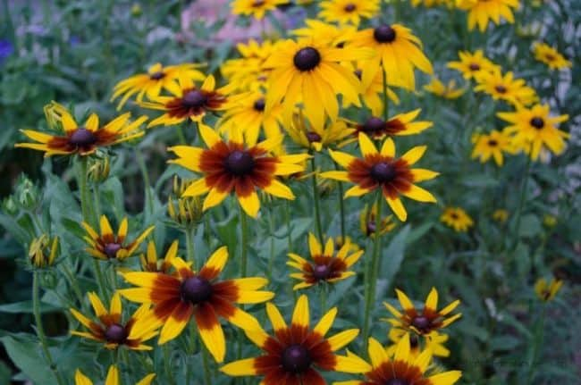 Best Drought Resistant Plants