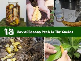 How To Use Banana Peels In Your Garden