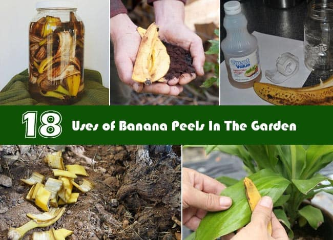 How To Use Banana Peels