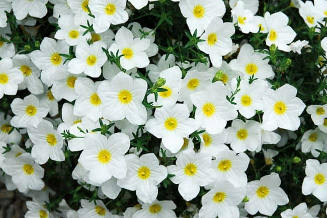 Flowers That do Well in Sun