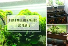 Using Aquarium Water for Plants