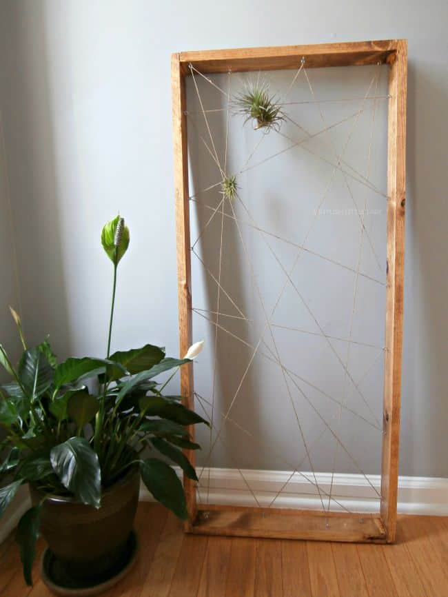 55 Eye Catching Air Plant Display Ideas Gardenoid