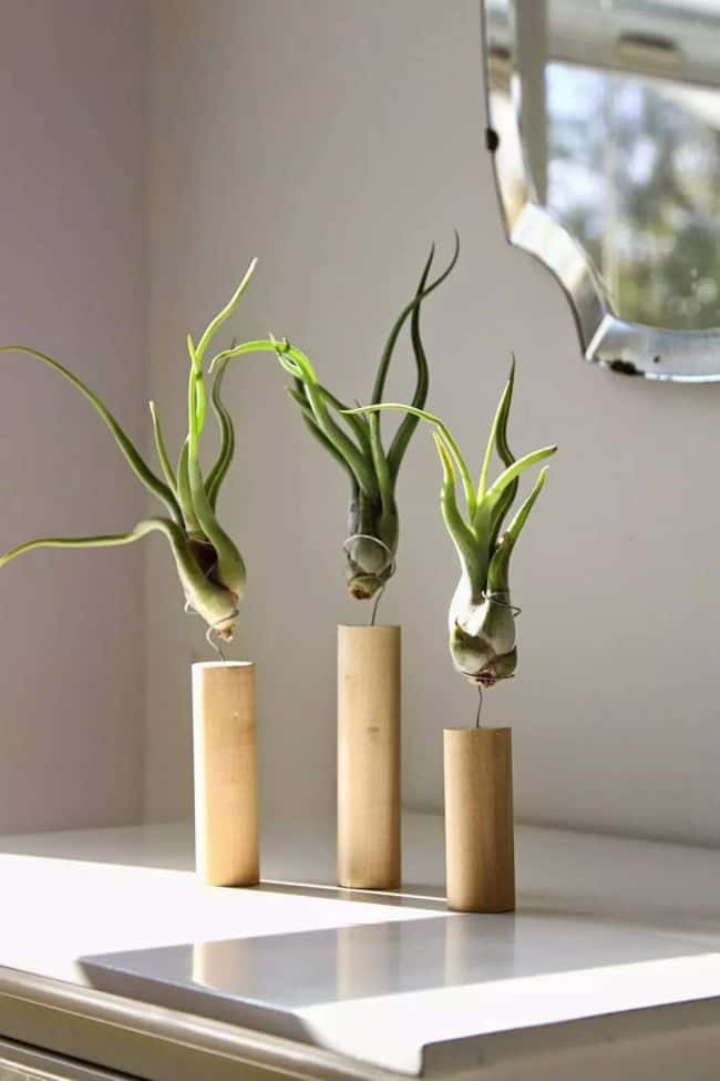 Air Plant Display Idea