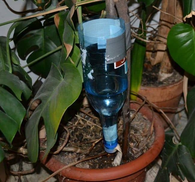 How To Build DIY Drip Irrigation System
