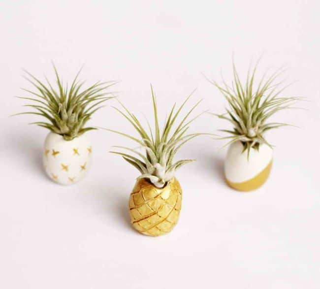 55 eye catching air plant display ideas gardenoid for Air plant holder ideas