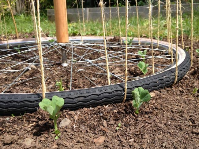 Pea Trellis Ideas Part - 41: Pea Trellis Ideas
