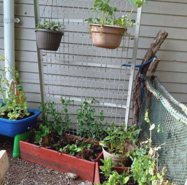 Homemade Trellis for Peas