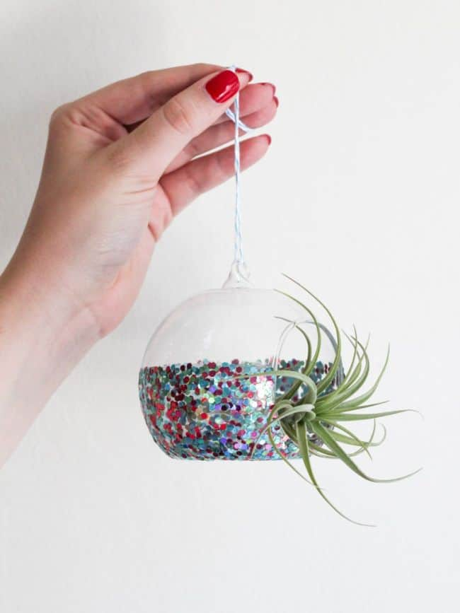 Air Plant Display Ideas
